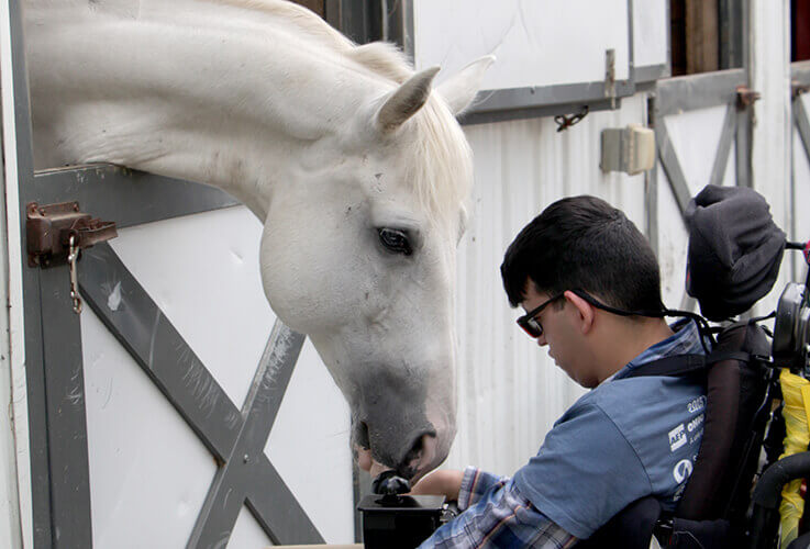 Young man in wheelchair with white horse