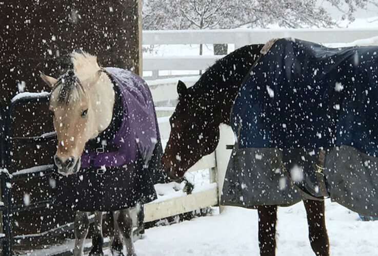 White and brown horse standing in snow